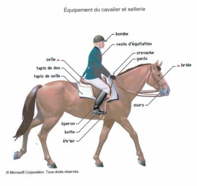 equitation equipement