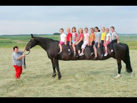 longe cheval
