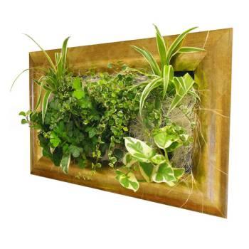 tableau vegetal
