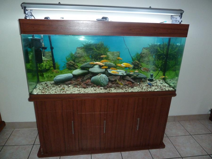 aquarium 500l