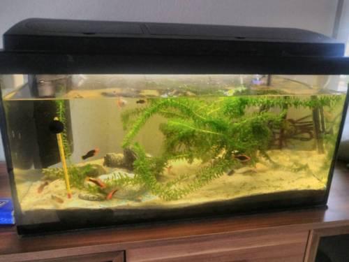 aquarium 50l