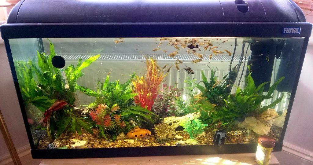 aquarium 80 cm
