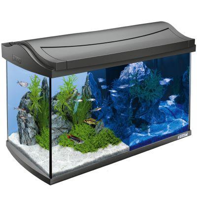 aquarium tetra 60l