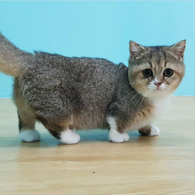 chat petite taille