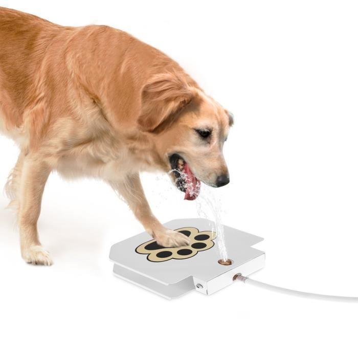 fontaine pour chien