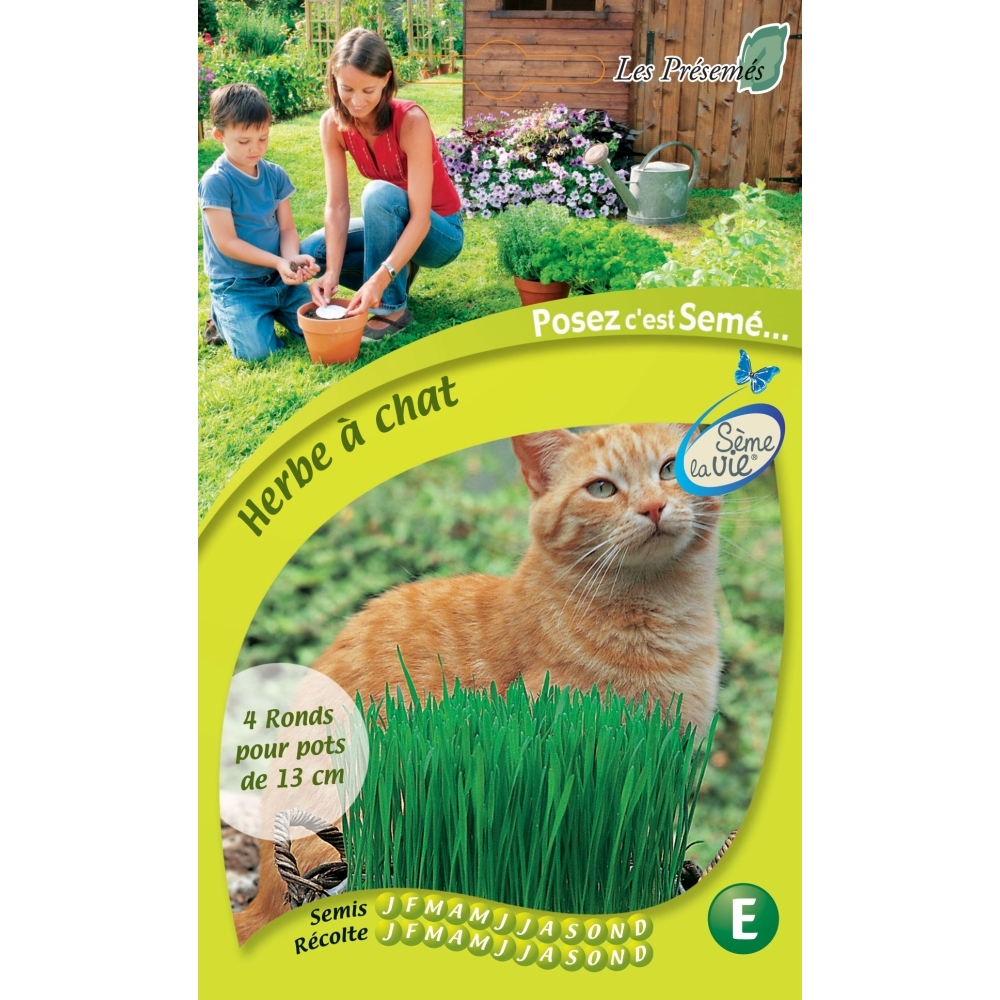 graine herbe a chat
