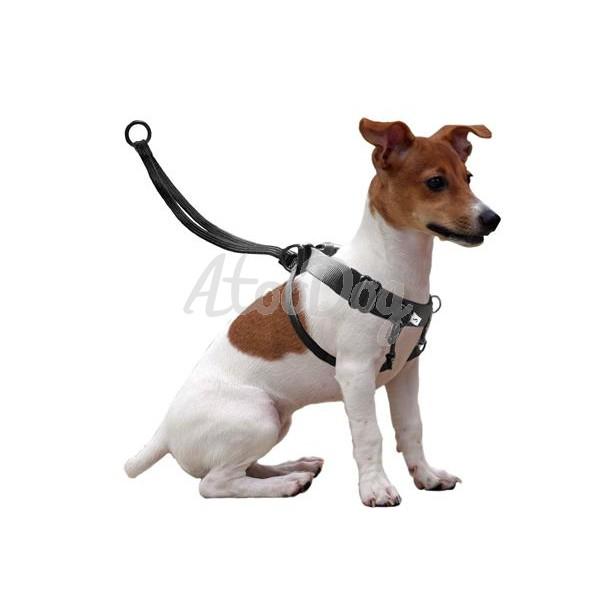 harnais chien qui tire