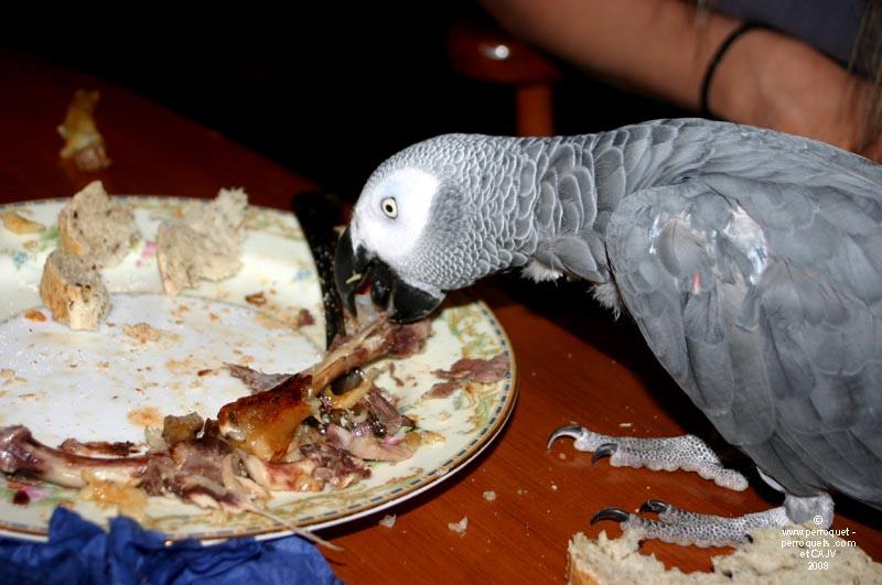 nourriture pour perroquet
