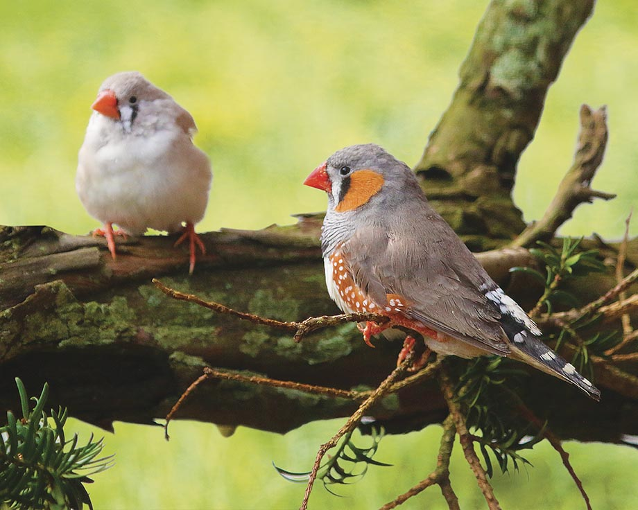 oiseaux exotiques