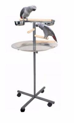 perchoir perroquet