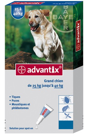 pipette chien advantix