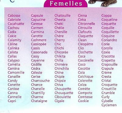 prenom de chat femelle