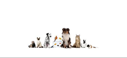 produits animaliers